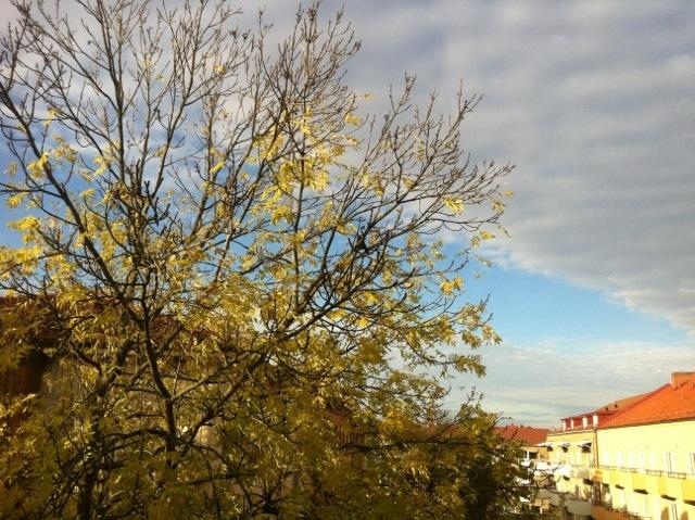 20121019-002411.jpg