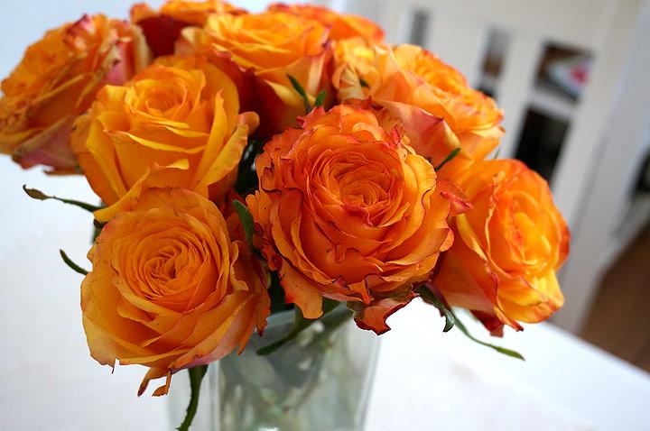 131027-003-Orangea-rosor