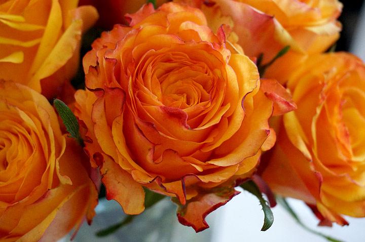 131027-004-Orangea-rosor