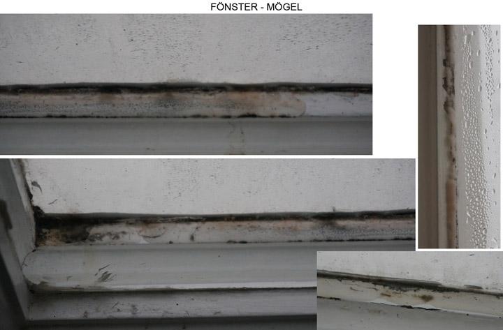 131110-fonster-mogel